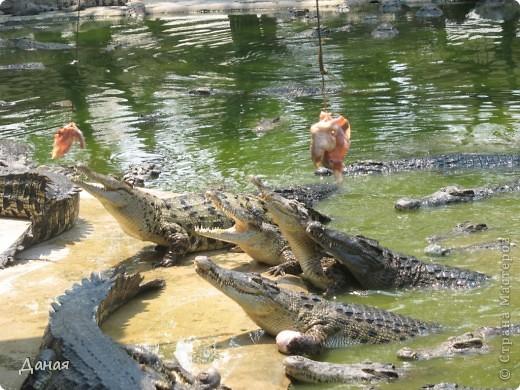 """""""Договорились я и мама, дождаться выходного и посмотреть""""... Нет, сегодня мы пойдем смотреть не гиппопотама, а крокодилов.  фото 17"""