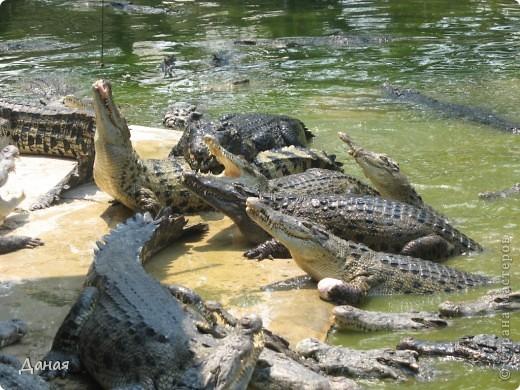 """""""Договорились я и мама, дождаться выходного и посмотреть""""... Нет, сегодня мы пойдем смотреть не гиппопотама, а крокодилов.  фото 18"""