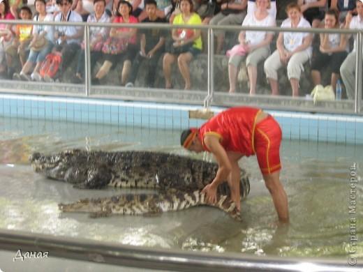 """""""Договорились я и мама, дождаться выходного и посмотреть""""... Нет, сегодня мы пойдем смотреть не гиппопотама, а крокодилов.  фото 20"""