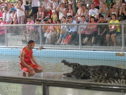 """""""Договорились я и мама, дождаться выходного и посмотреть""""... Нет, сегодня мы пойдем смотреть не гиппопотама, а крокодилов.  фото 21"""