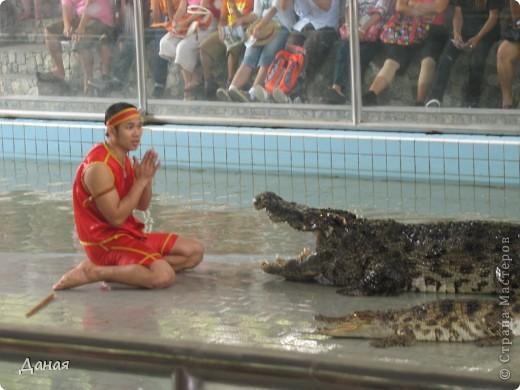 """""""Договорились я и мама, дождаться выходного и посмотреть""""... Нет, сегодня мы пойдем смотреть не гиппопотама, а крокодилов.  фото 22"""