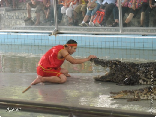 """""""Договорились я и мама, дождаться выходного и посмотреть""""... Нет, сегодня мы пойдем смотреть не гиппопотама, а крокодилов.  фото 23"""