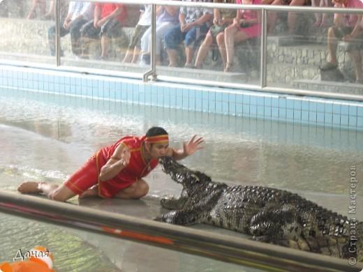 """""""Договорились я и мама, дождаться выходного и посмотреть""""... Нет, сегодня мы пойдем смотреть не гиппопотама, а крокодилов.  фото 25"""