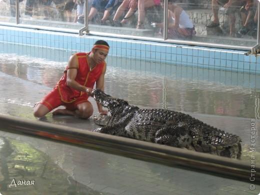 """""""Договорились я и мама, дождаться выходного и посмотреть""""... Нет, сегодня мы пойдем смотреть не гиппопотама, а крокодилов.  фото 26"""
