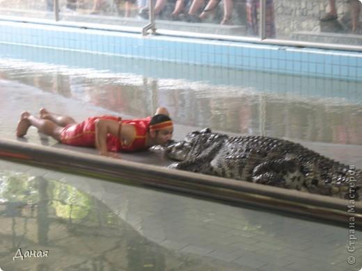 """""""Договорились я и мама, дождаться выходного и посмотреть""""... Нет, сегодня мы пойдем смотреть не гиппопотама, а крокодилов.  фото 27"""