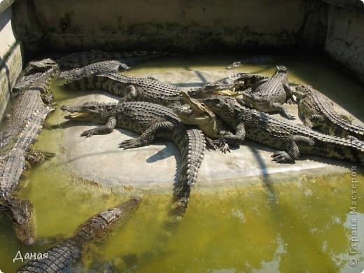 """""""Договорились я и мама, дождаться выходного и посмотреть""""... Нет, сегодня мы пойдем смотреть не гиппопотама, а крокодилов.  фото 30"""