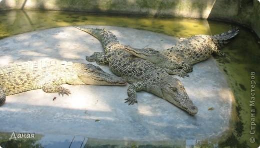 """""""Договорились я и мама, дождаться выходного и посмотреть""""... Нет, сегодня мы пойдем смотреть не гиппопотама, а крокодилов.  фото 29"""