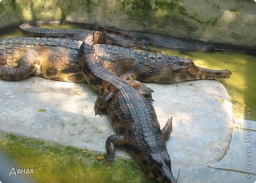 """""""Договорились я и мама, дождаться выходного и посмотреть""""... Нет, сегодня мы пойдем смотреть не гиппопотама, а крокодилов.  фото 32"""