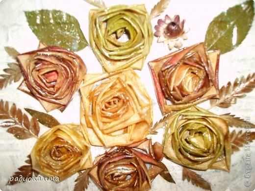 У меня цветут цветы необыкновенные - яблочные розы, таких нет ни у кого. Они бывают желтые, красные, зеленые. Яблоки продают у нас порой с такой неприятной кожурой, что ее срезают и выбрасывают, а у меня все в дело пошло. Свернула кожуру в розочку и сушить на батарею -  результат перед вами.  фото 2