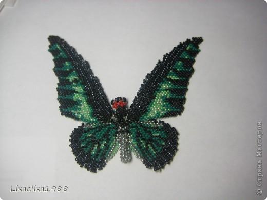 Бабочка Птицекрыл Брука