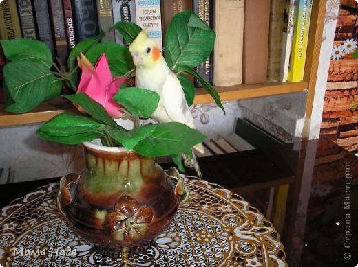 Дуже люблю птах1в.   фото 4
