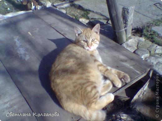 Посвящается моему любимому котику Рыжику, который ушел из дома и пропал уже больше месяца.  Это композиция - аллегория.  фото 7