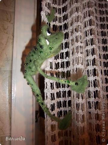 Лягушечка,моя. фото 3