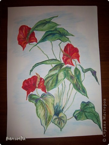 Рисунок акварельными карандашами. Названия цветка не помню. фото 1
