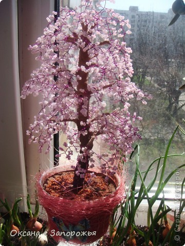 Новая сакура розовая.  фото 2