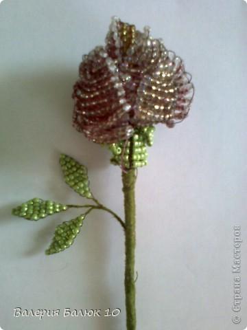 Эту розу я делала для мамы на день ее рождения! фото 1