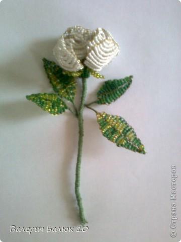 Эту розу я делала для мамы на день ее рождения! фото 2