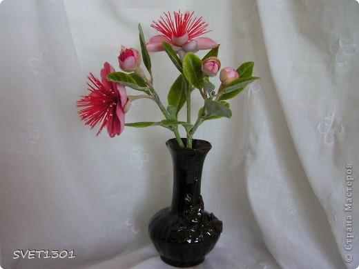 Вот такое растение у меня зацвело (из самодельного ХФ), а вы угадайте что это. Далее фото разных ракурсов. фото 1