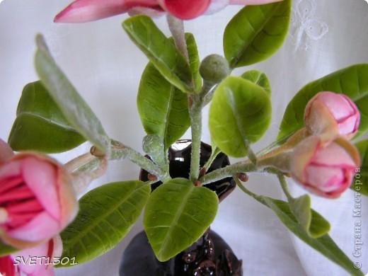Вот такое растение у меня зацвело (из самодельного ХФ), а вы угадайте что это. Далее фото разных ракурсов. фото 3