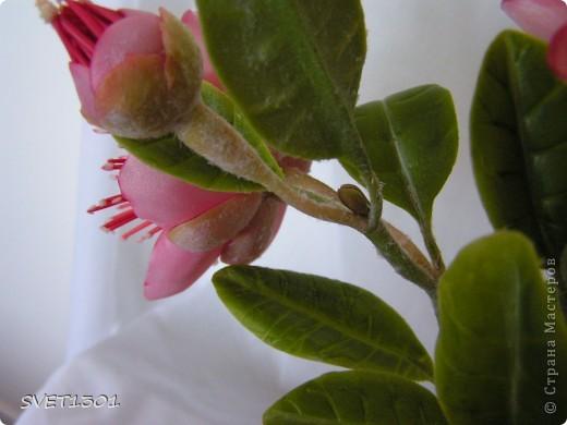 Вот такое растение у меня зацвело (из самодельного ХФ), а вы угадайте что это. Далее фото разных ракурсов. фото 4