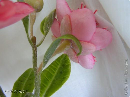 Вот такое растение у меня зацвело (из самодельного ХФ), а вы угадайте что это. Далее фото разных ракурсов. фото 6