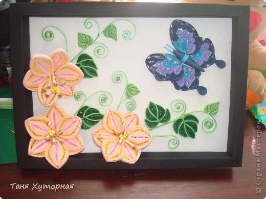 Цветы и бабочка фото 1