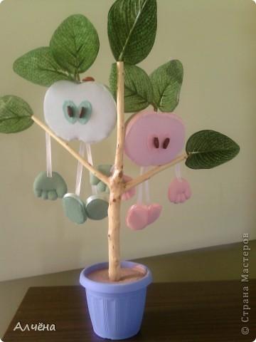 У меня яблочки уже выросли! фото 5