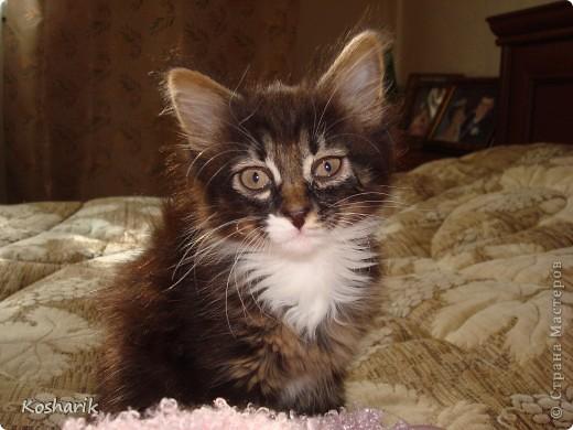 Здравствуйте... Этот фоторепортаж я посвящаю своей кошечке, маленькой красавице Маруське... Эта маленькая кошечка по имени Маруська, обитает в моей квартире, она любит лежать на подоконниках, играть, лазить везде...День рождения отмечает в один день со мной...Настоящая кошка, которая гуляет сама по себе... фото 5