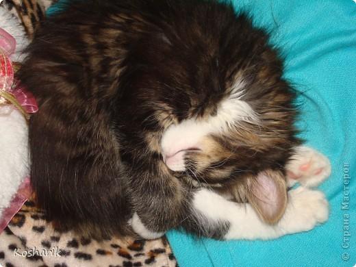 Здравствуйте... Этот фоторепортаж я посвящаю своей кошечке, маленькой красавице Маруське... Эта маленькая кошечка по имени Маруська, обитает в моей квартире, она любит лежать на подоконниках, играть, лазить везде...День рождения отмечает в один день со мной...Настоящая кошка, которая гуляет сама по себе... фото 4