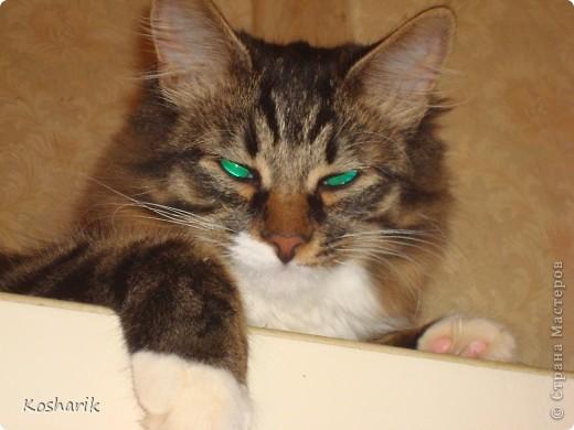 Здравствуйте... Этот фоторепортаж я посвящаю своей кошечке, маленькой красавице Маруське... Эта маленькая кошечка по имени Маруська, обитает в моей квартире, она любит лежать на подоконниках, играть, лазить везде...День рождения отмечает в один день со мной...Настоящая кошка, которая гуляет сама по себе... фото 2