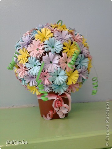 Мои цветы... фото 1