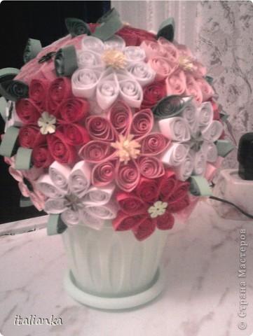 Мои цветы... фото 3