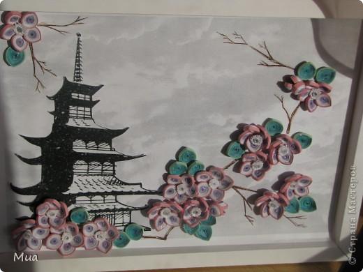 Сакура фото 1