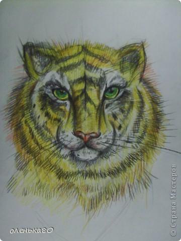 """вот такой тигр """"вырос""""у меня фото 1"""