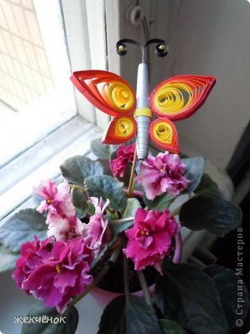 бабочка! фото 1