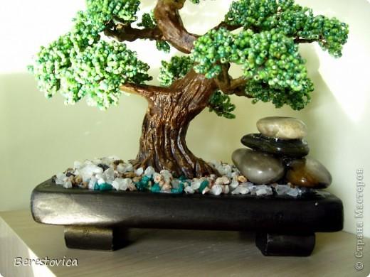 Серьезный бонсай и веселое фантазийное дерево)) фото 5