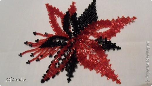 Красный цветок фото 1