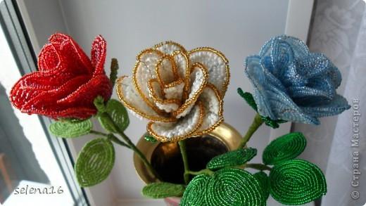 цветы фото 4