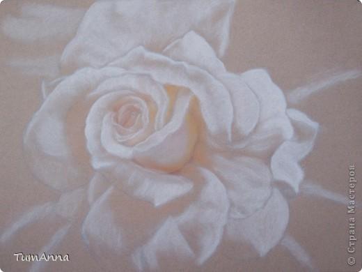 Белая роза фото 2