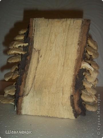 Волшебное деревце. фото 3