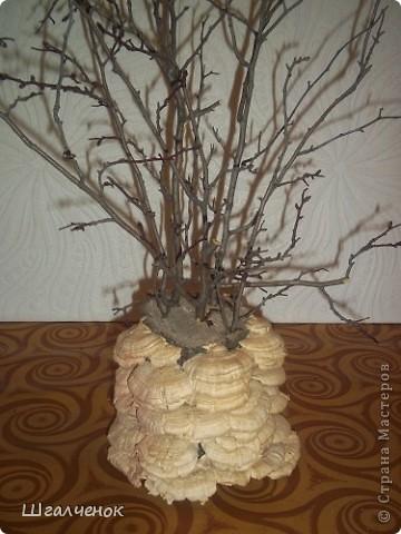 Волшебное деревце. фото 5