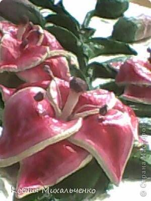 мои первые лилии фото 1