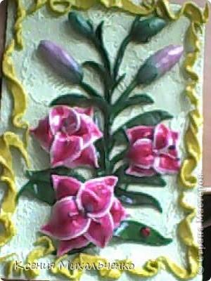 мои первые лилии фото 6