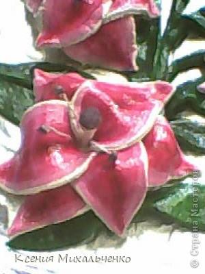 мои первые лилии фото 2
