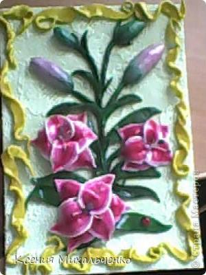 мои первые лилии фото 7