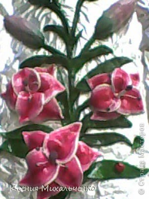 мои первые лилии фото 3
