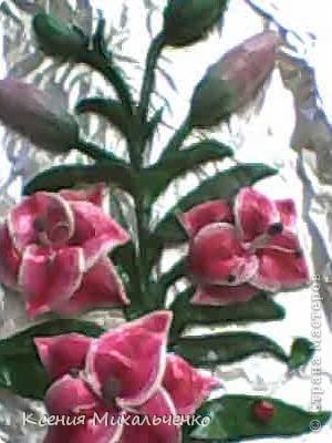 мои первые лилии фото 5