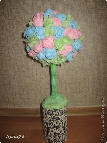 Мое первое розовое деревце