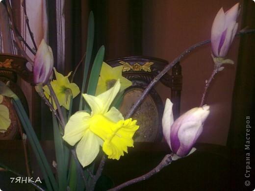 Анемоны - просто красавицы фото 17