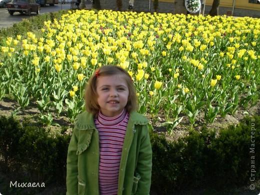 Я живу в городе Черновцы,Украина, в этом городе живу уже 7 лет, но весной заметила что у нас в городе очень много красивых тюльпанов. фото 2